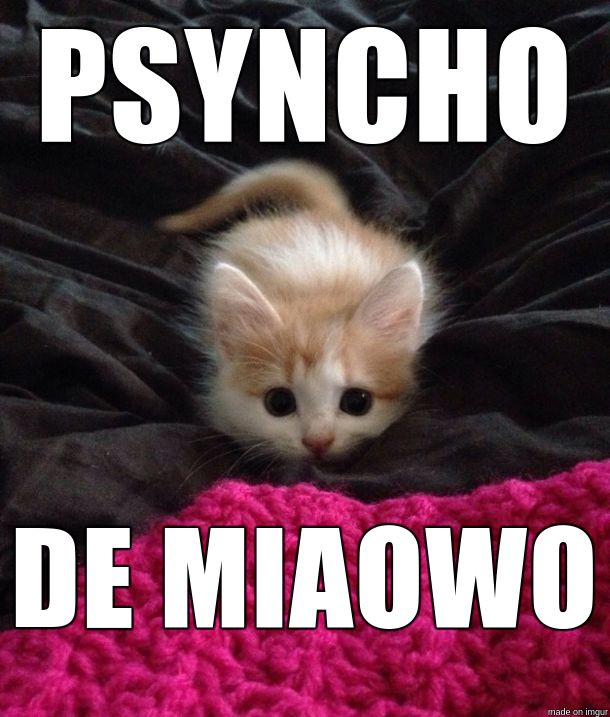 kitten ready to pounce for cinco de mayo