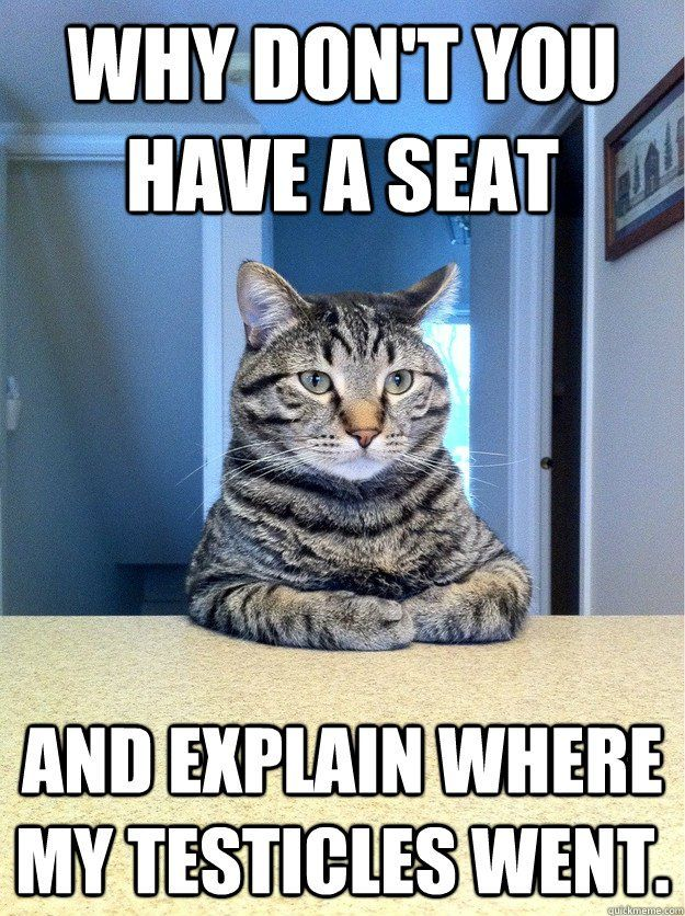 Grasp the Inspirational Funny Cat Pictures 1