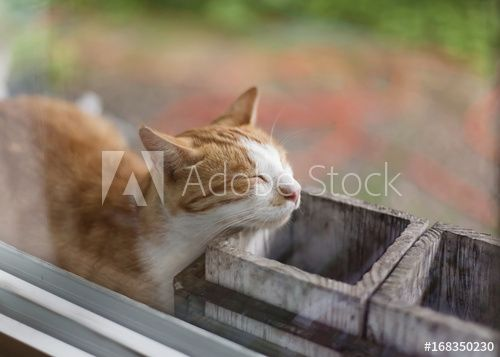 Funny cat fell asleep leaning against empty flower pots