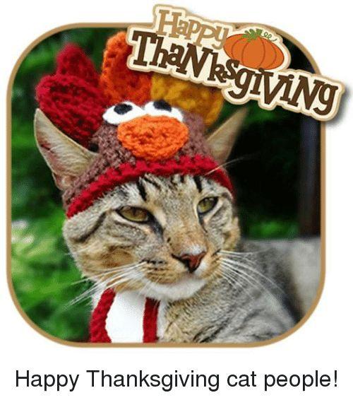 Happy Thanksgiving Cat