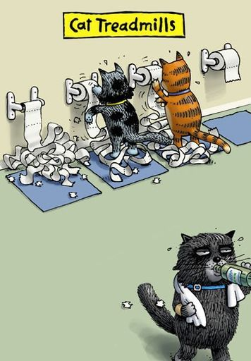 Cat Treadmills Funny Blank Card