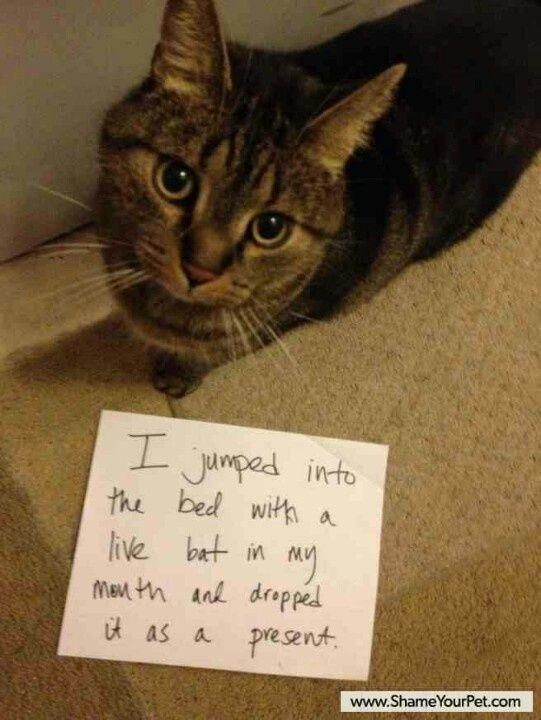 funny cat ts