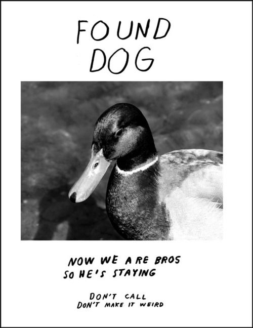Grasp the Inspirational Funny Duck Dog Memes