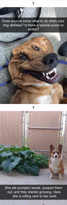 50 The Happiest Dog Memes That Will Keep You Laughing For Hours dogmemes