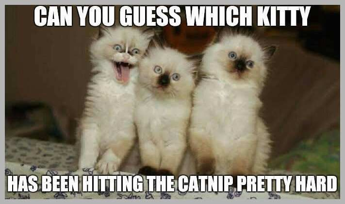 Kitty Meme Unique 20 Super Duper Cute and Funny Kitty Memes Kitty Meme New 16