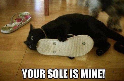 Happy Birthday Cat Memes