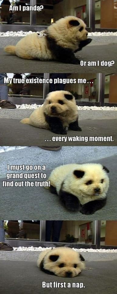 Poor Panda Dog will he ever know