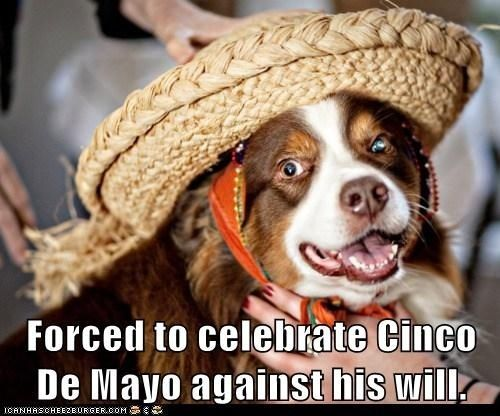 Forced To Celebrate Cinco De Mayo Against His Will