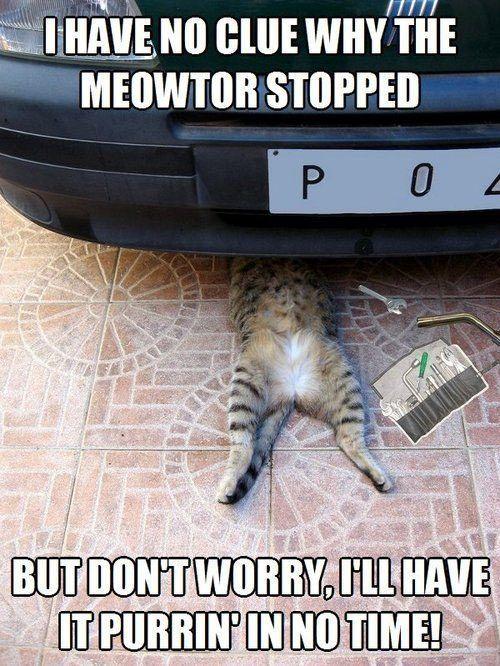 funny cat repair car engine