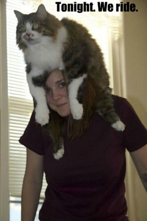 42 pictures of funny cats for this week funny cat pictures funny cats