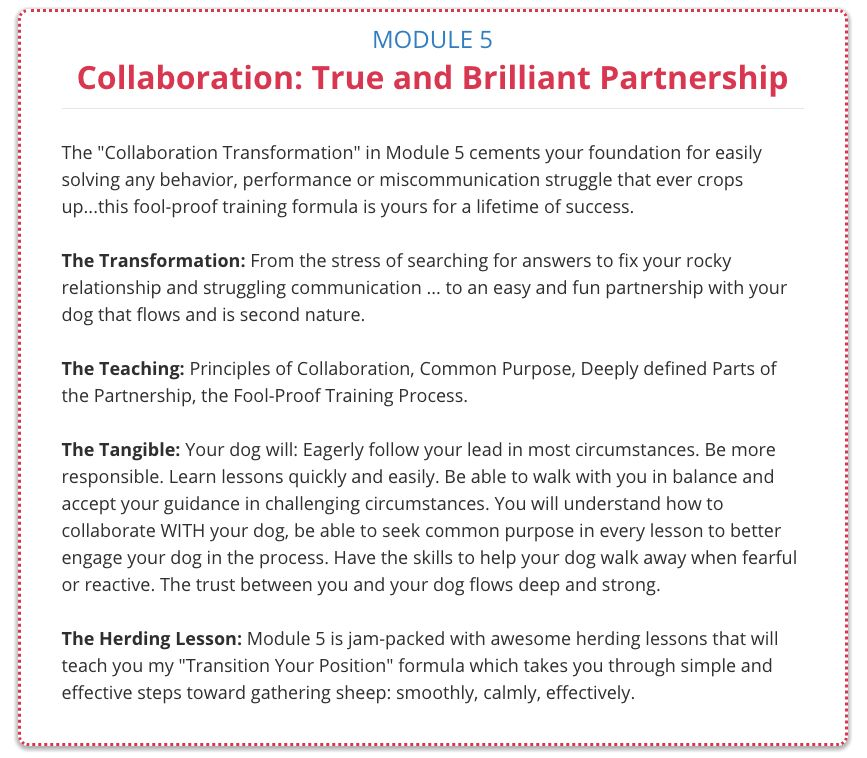 Your Herding Partners made easy for you Foundation Path
