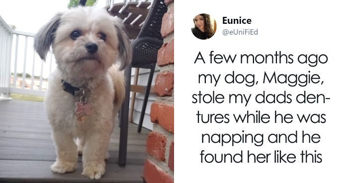 Dog Steals Owner s Dentures While He Sleeps Hilarity Ensues