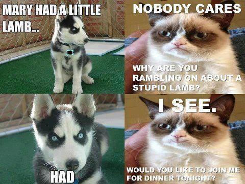 Perfect Grumpy Dog Grump Cat Funny Grumpy Cats Gato Grumpy Grumpy Cat