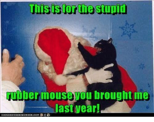 Grumpy Cat Mouse and Stupidity This is forthe stupid uober mouse wou brought