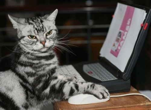 Grasp the Luxury Busy Funny Cat Pictures