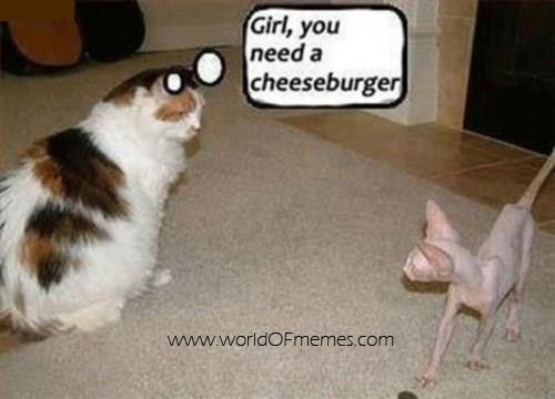 Girl You Need A Cheesburger Funny Fat Cat Picture