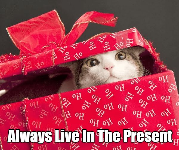 caturday meme of a cat ing out of a t wrapped box