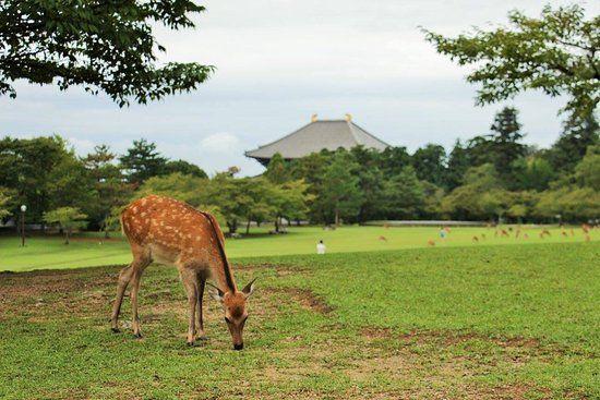 A day trip to Nara Nara Park