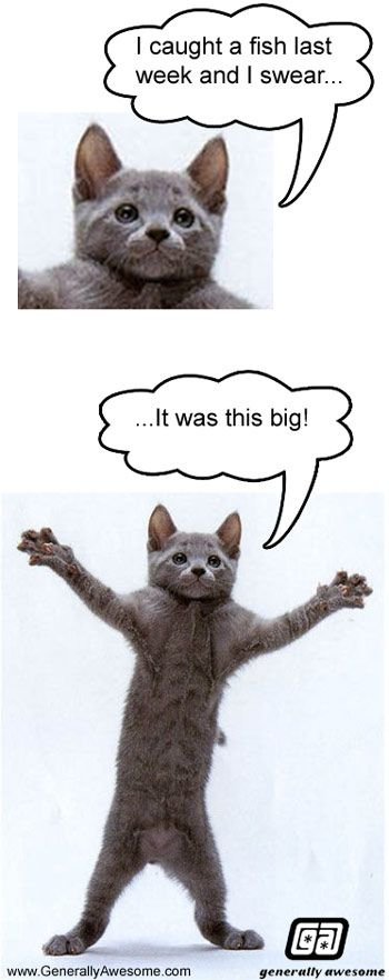 Cat Fish Whopper Kitty Cat tells about his big catch Funny