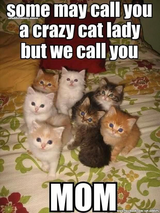 Some May Call You A Crazy Cat Lady But Call You Funny Cats Meme