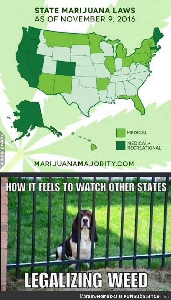 Aww Cool Funny Shit Happens Picture Video Weed