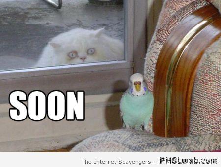Soon funny cat meme at PMSLweb
