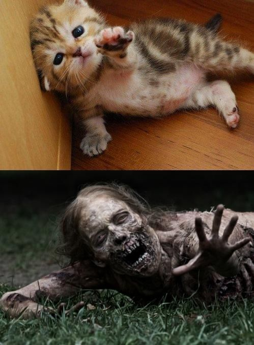 The Walking Dead 2 Walking Dead Funny Cute Zombie