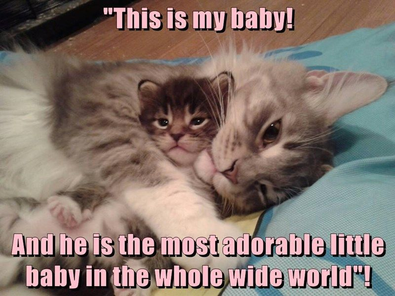Grasp the Marvelous Funny Cat and Baby Pictures with Captions