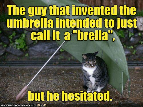 umbrella cat brella guy hesitated caption invented