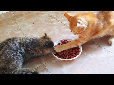 Cats protect their food
