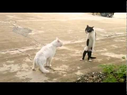 The Legend of Cobra Cat Funny cats fighting cobra style
