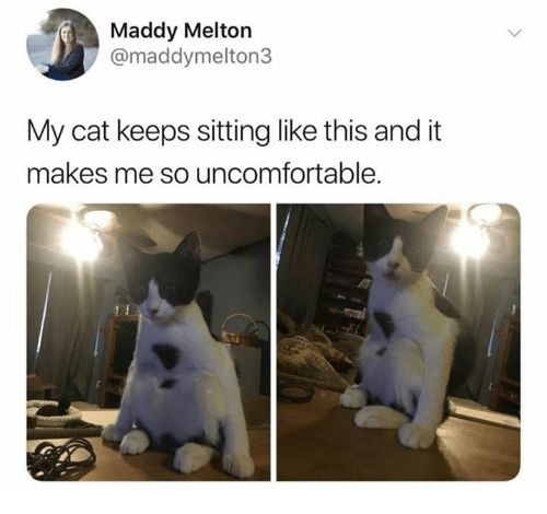 Humans of Tumblr Cat and This Maddy Melton maddymelton3 My cat keeps