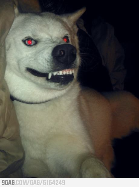 Lennie kills a dog