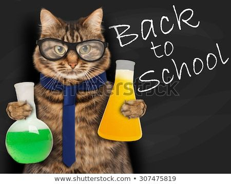 Funny cat is studying chemistry It is holding bulbs with liquid on blackboard background Back to school Image