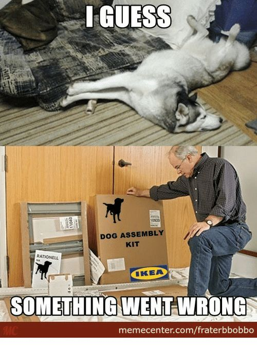 Ikea Guess and Dog GUESS DOG ASSEMBLY KIT IKEA SOMETHING WENT WRONG memecenter fraterbbobbo
