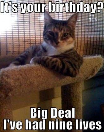 Cat Memes Cat Memes