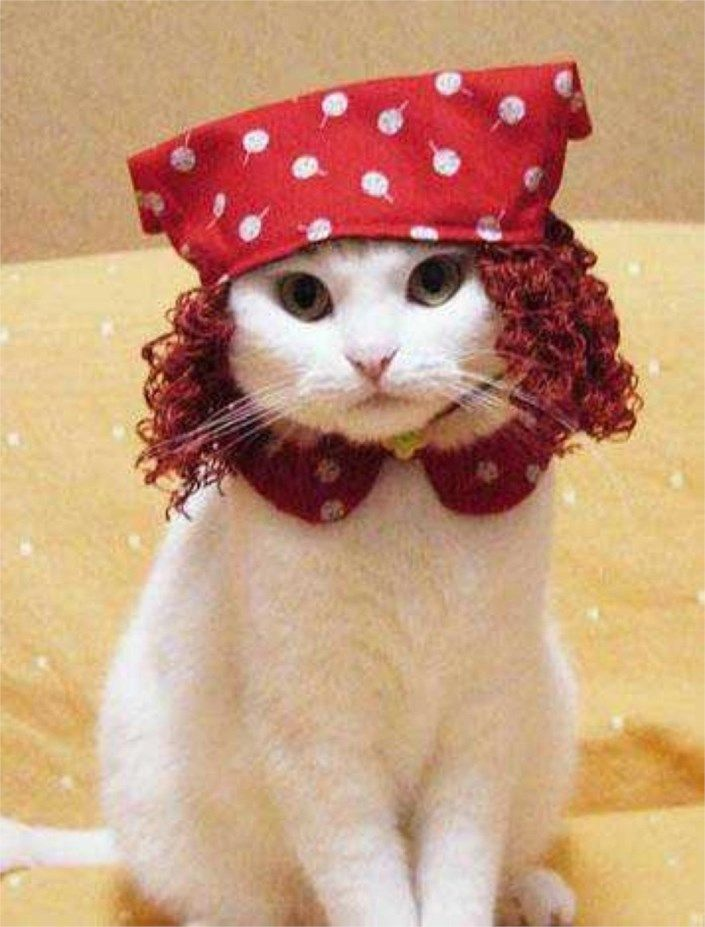 funny cat pictures wearing hat 4845