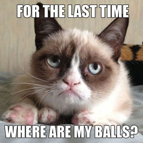 Lost my balls funny cat pictures