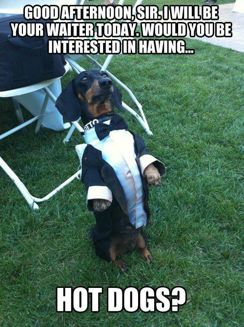 Servant dog…