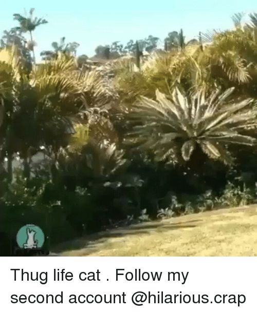 Cats Funny and Life Thug life cat Follow my second account