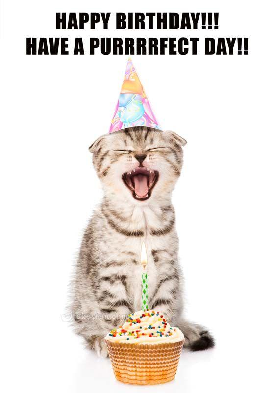 funny birthday memes Funny Cats