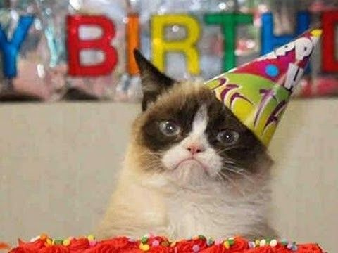 "Create meme ""The most evil cat in the world The most evil cat in the world grumpy cat birthday happy birthday meme """