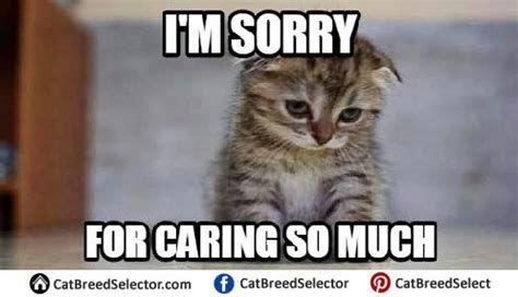 Really sad cat meme funny cute angry grumpy cats memes 497x286 Cat memes sad cowboy