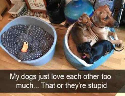 50 Funny Animals – Funnyfoto