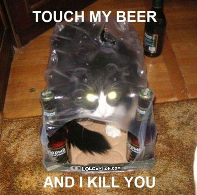 Funny Cat with Captions Beer