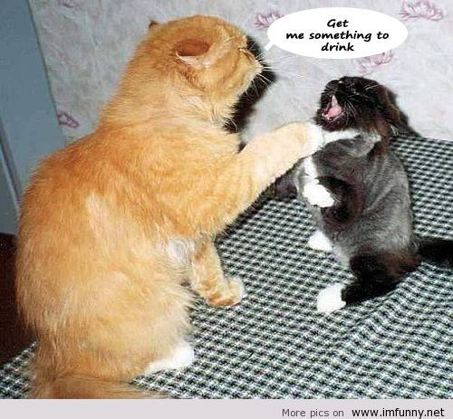 Cat with sayings