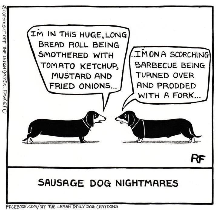 Winnie Dogs Dachshund Love Funny Dachshund Funny Dogs Daschund Dog Leash