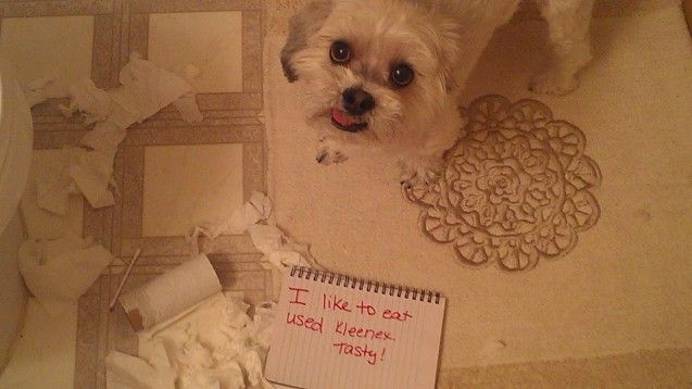 Teddy s into my bathroom trash can when I m not paying attention