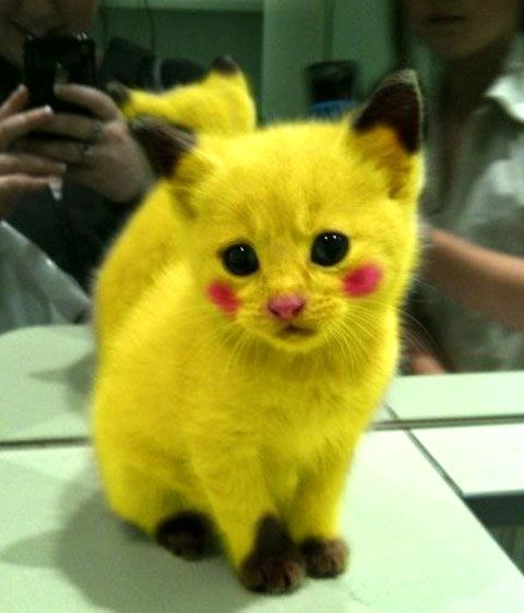 Funny Cat In Yellow Color