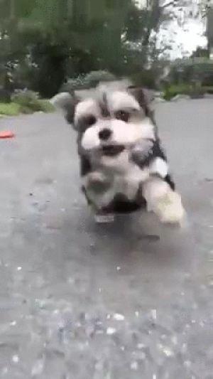 GIF joy cute puppy dog best animated GIFs puppy free